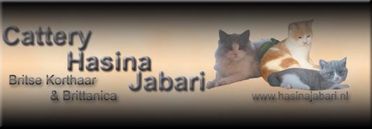 cattery Hasina Jabari